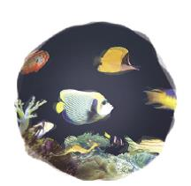 Aquarium Fish Swimming Effect