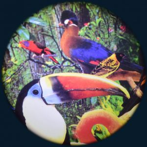 "Tropical Birds 6"" Effect Wheel"