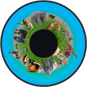 Animals 6″ Effect Wheel