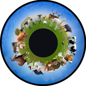 Farm Animals 6″ Effect Wheel