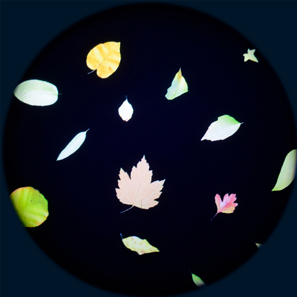 Leaf (Colour) 6″ Effect Wheel