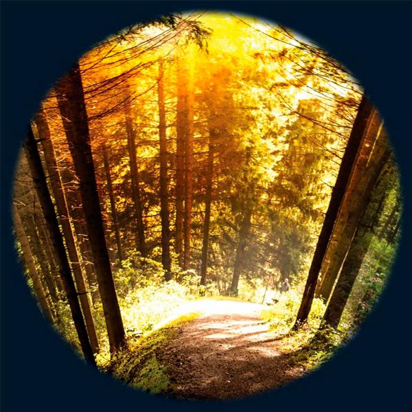 Seasoned Woods 6″ Effect Wheel